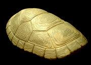 turtleshell4.jpg
