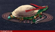 Raphael-Teenage-Mutant-Ninja-Turtles--42669.jpg