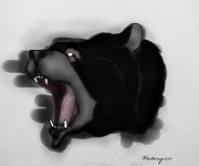 чёрный медведь.jpg