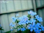 blue_spring_by_murocean-d506yst.jpg
