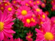 beauty_of_nature_by_murocean-d4pgbbe.jpg
