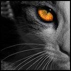 Аватары - 53f4483a2fe7.jpg