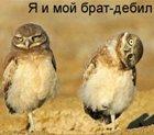 Аватары - 4f014008b7df.jpg