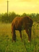 Домашние и не только животные - DSCN1373(2).jpg