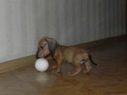 Домашние и не только животные - x_b836ca89.jpg