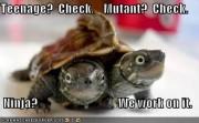 Приколы над ТMNТ - funny-pictures-tmnt-turtles.jpg