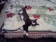 Мой кот Тимофей. - y_0fb856a3.jpg