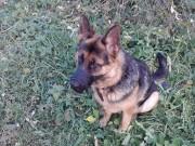 Мой пёс Монергеймн. Не сидит на месте, еле успела сделать фото. - y_bc05d70d.jpg