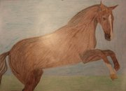 Наш Арт - horse.jpg