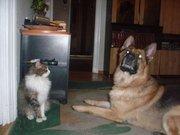 Домашние и не только животные - пес2.jpg