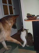 Домашние и не только животные - кот.jpg