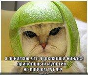 Приколы над ТMNТ - cherepashki-nindzya_1283074649.jpg