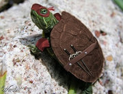 Приколы над ТMNТ - lil-ninja-turtle.jpg