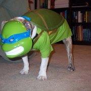 Косплей на Черепашек Ниндзя - Teenage-Mutant-Ninja-Turtle-Dog-280x280.jpg