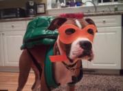 Косплей на Черепашек Ниндзя - dog costume.png