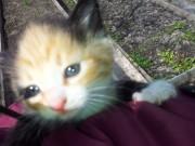 Это котёнок сестры, её зовут Листочка - 20120502_141002.jpg