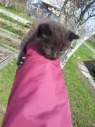 Этого зовут Крошка - 20120502_141053.jpg