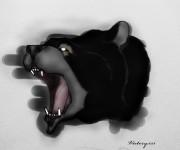 Барибал чёрный медведь . - чёрный медведь.jpg