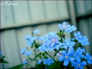 Фото-Мгновения - blue_spring_by_murocean-d506yst.jpg