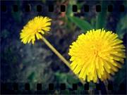 Фото-Мгновения - color_of_summer_by_murocean-d5d5qu6.jpg
