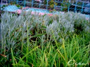 раньше использовался копирайт Ocean - grass_by_murocean-d4pgcy3.jpg