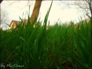 Фото-Мгновения - spring_grass_by_murocean-d4wyo8a.jpg