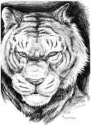 TMNT рисунки от Махайрод - 13.jpg