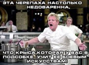 Приколы над ТMNТ - кулинарное-шоу-черепашки-ниндзя-крыса-черепаха-644036.jpeg
