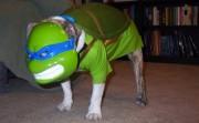 Приколы над ТMNТ - ninja-turtle-dog-580x357.jpg