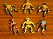Черепашьи коллекции форумчан - P1010847 (2).JPG