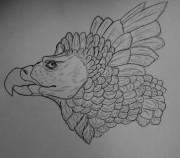 Набросок птички гарпии - DSCN3810.JPG