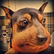 Юмор - dog_bee_1.jpg